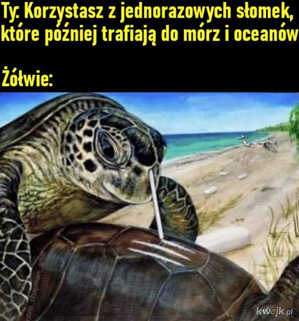 Żółwie ze słomkami