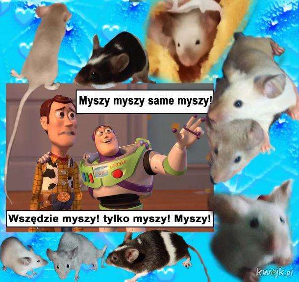 Myszy myszy! Wszędzie myszy!