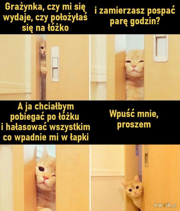 Wpuść mnie, proszem