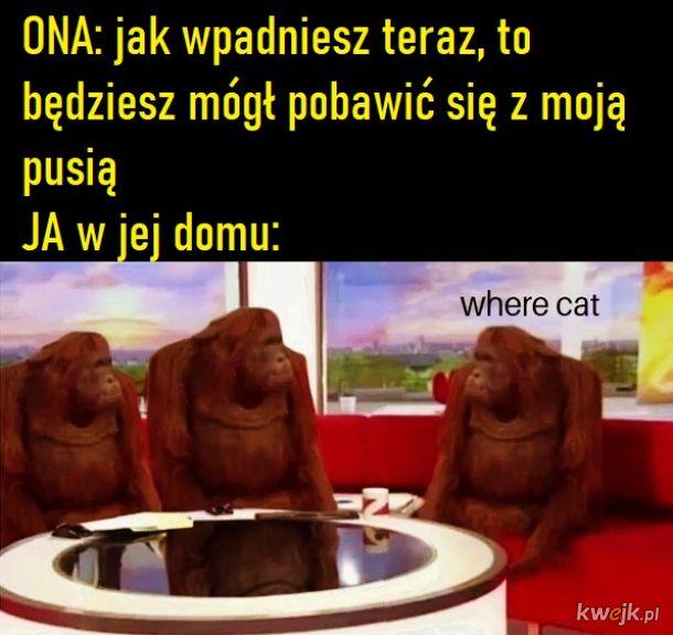 Pusia miau