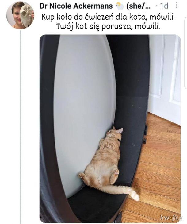 Utożsamiam się z tym kotem