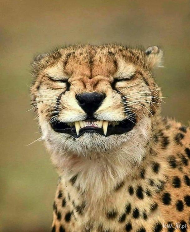 Gdy fotograf każe się uśmiechnąć