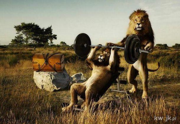 Teraz wiecie dlaczego lwice polują.