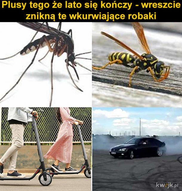 Plusy