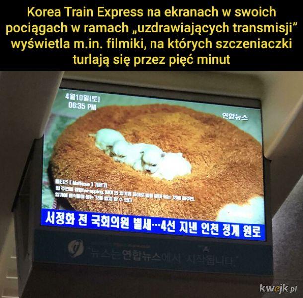 Ciekawostki prosto z Korei Południowej