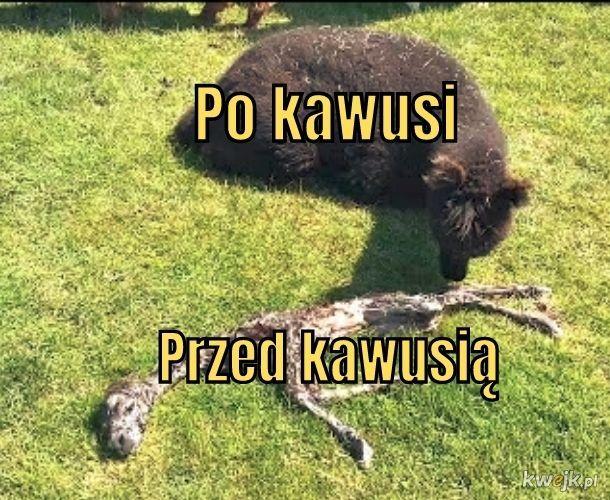 Kawusia