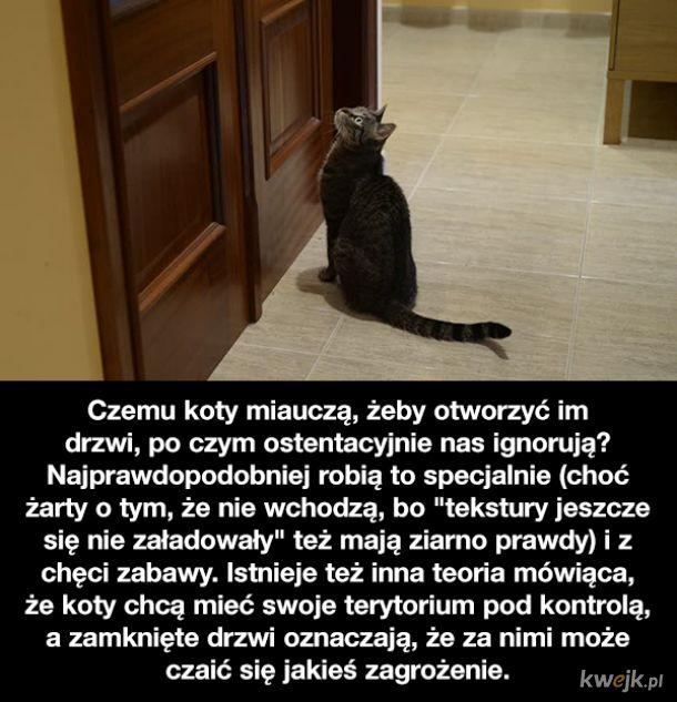Ciekawostki o kotach, obrazek 6