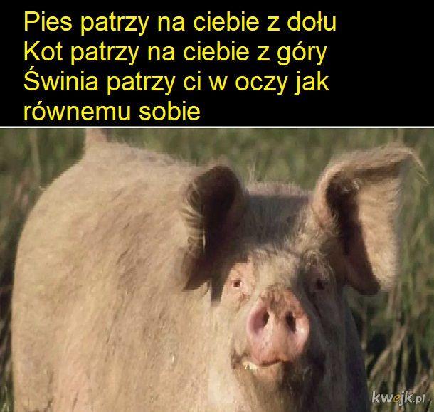Zwierzęta mają tak