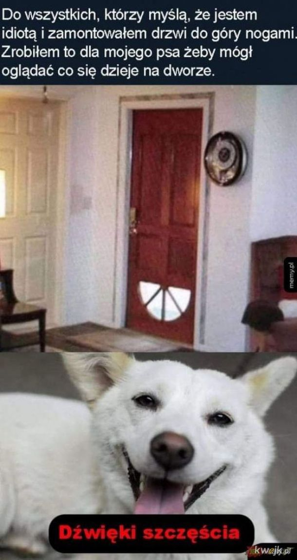 pies też musi coś widzieć