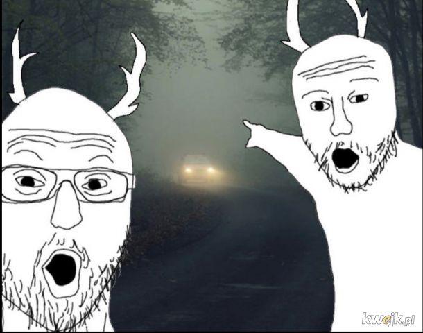 Kierowca sobie jedzie, a jelenie tymczasem: