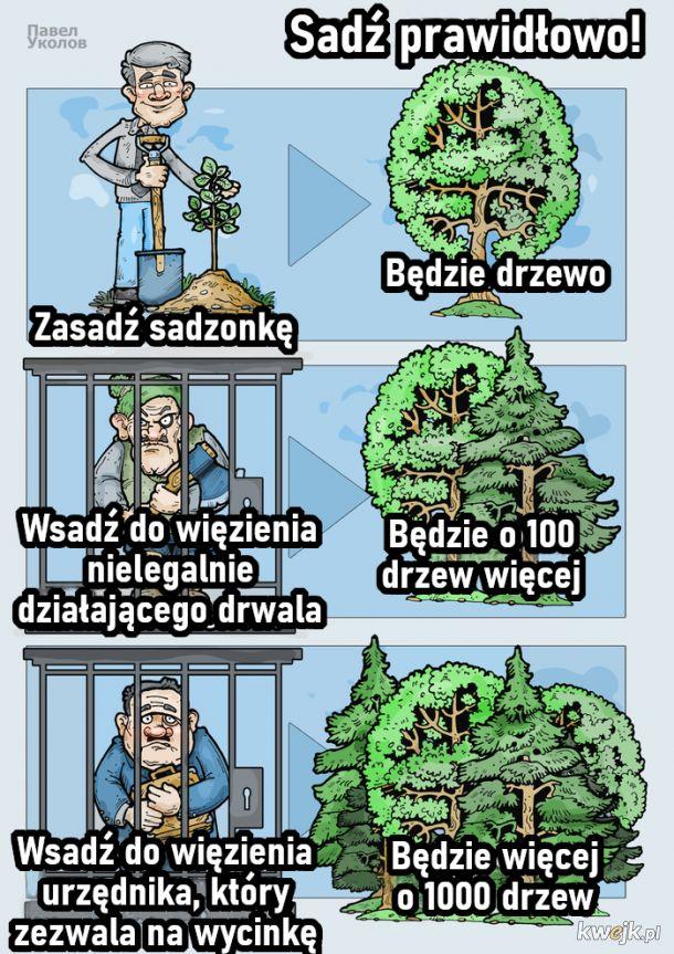 Jak prawidłowo sadzić drzewa