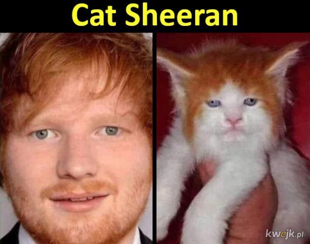Cat Sheeran