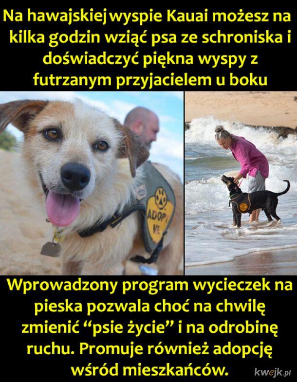 Przygody z piesiem
