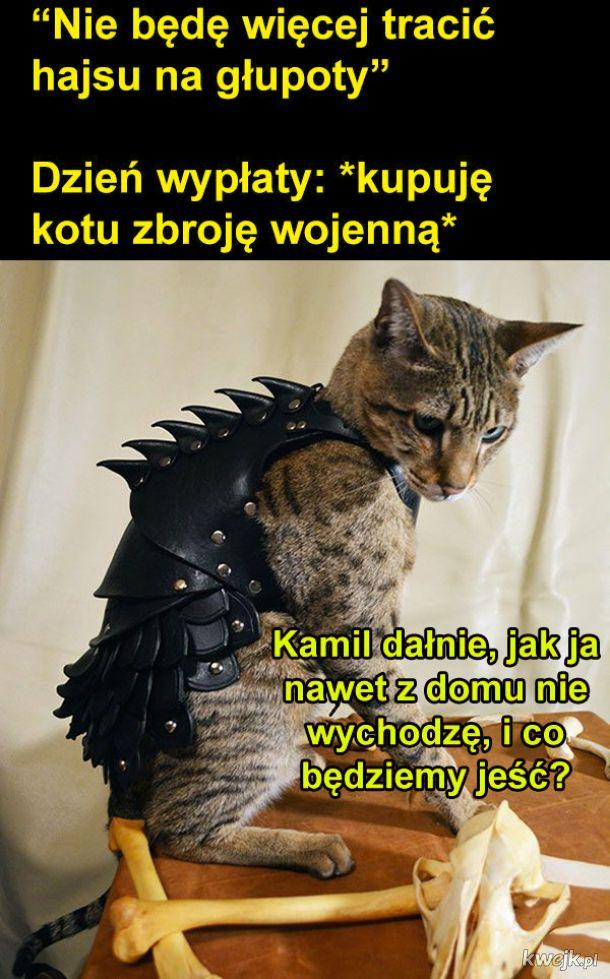 Zbroja dla kota