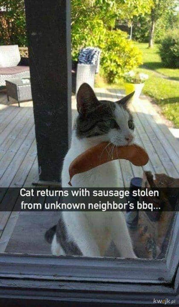 Przedsiębiorczy kotek