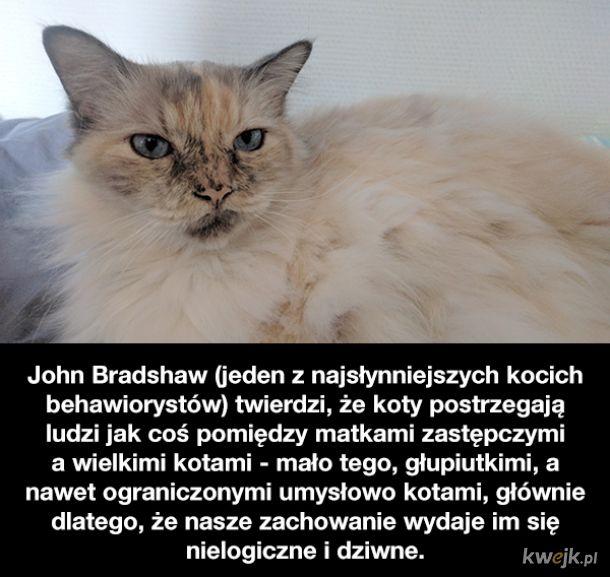 Ciekawostki o kotach, obrazek 11