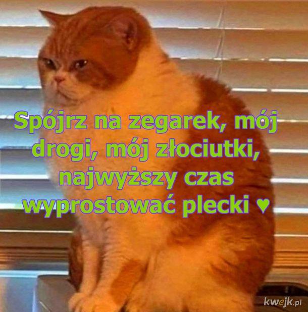 Rada pana kota