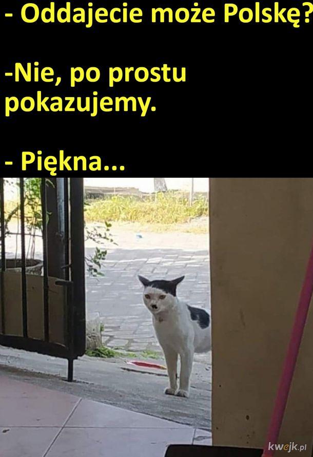 Oddajecie może Polskę?