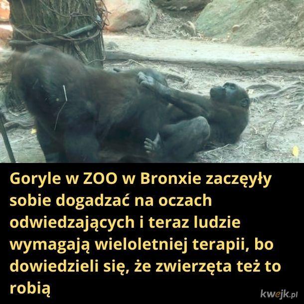 Sprośne goryle