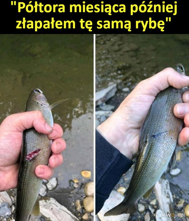 Wygojona rybka