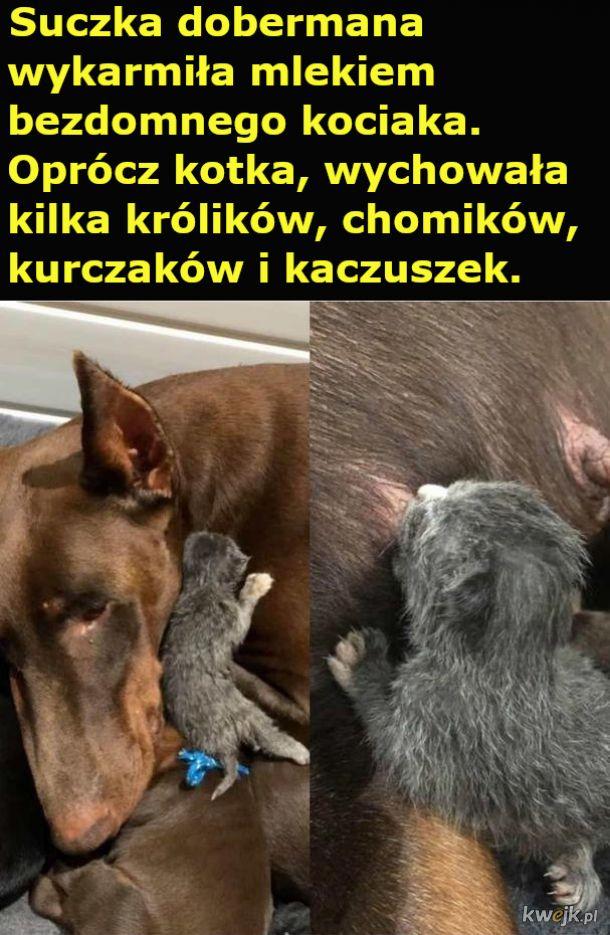 Pies o wielkim sercu