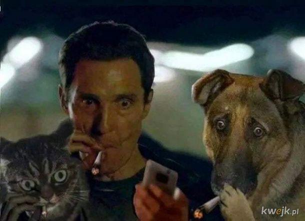 Pies, kot i facet palą papierosy i robią wielkie oczy - obrazek do memów