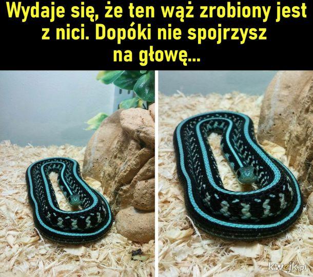 Wąż rzeczny tududutududu jest niebezpieczny tududutududu