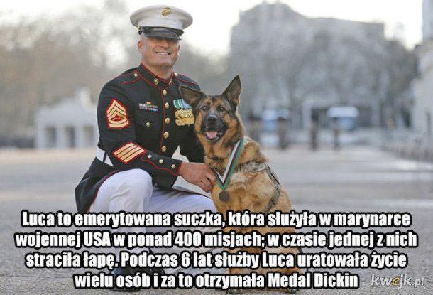 Psy są super!