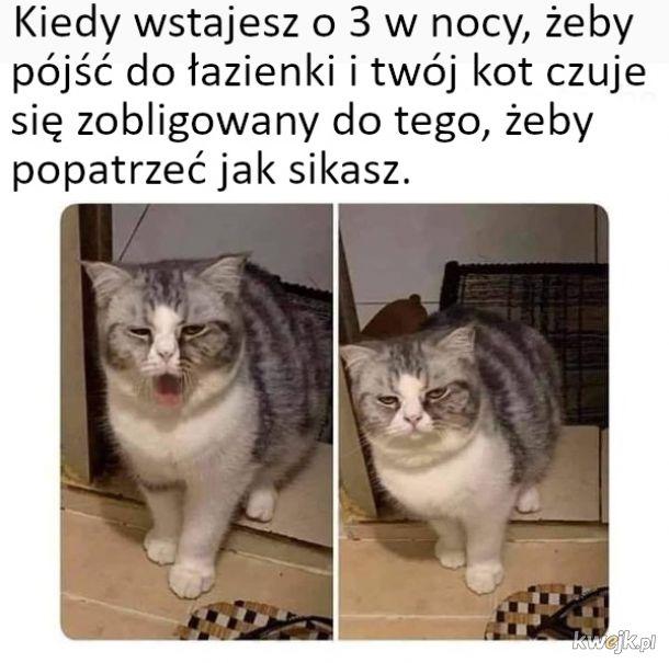 Kocie memy