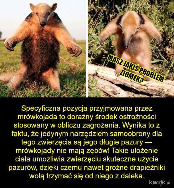 Świat zwierząt zadziwia po raz kolejny!