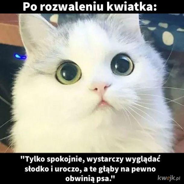 Za każdym k###a razem. Mój kot uważa, że jestem głupszy od niego.