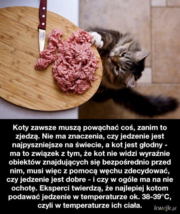 Ciekawostki o kotach, obrazek 8