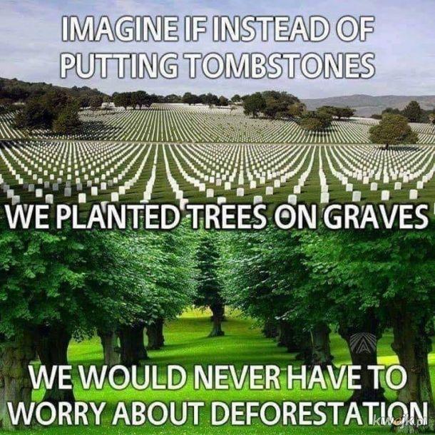 Moim zdaniem lepsze drzewo od granitu na wysoki połysk