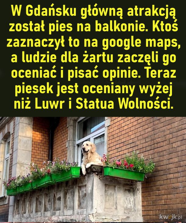 Pies na balkonie