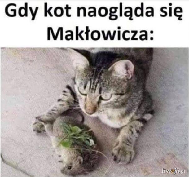 Gdy kot naogląda się Makłowicza