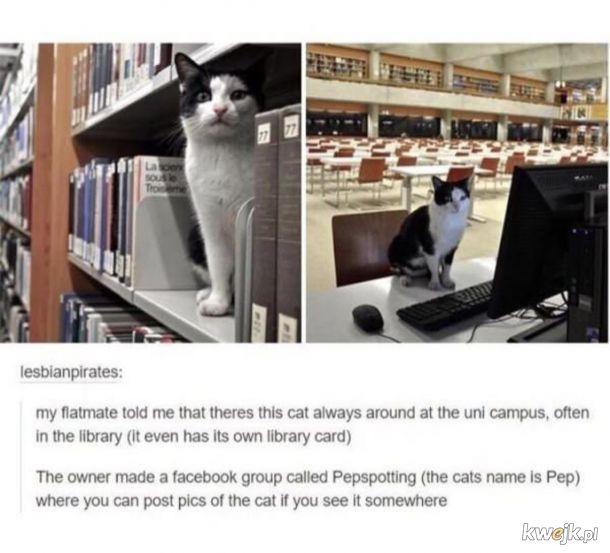 Bibliotekotarz.