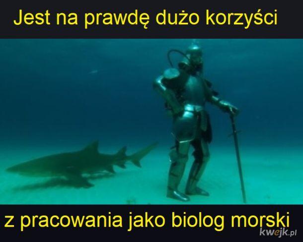 Praca z rekinami taka jest