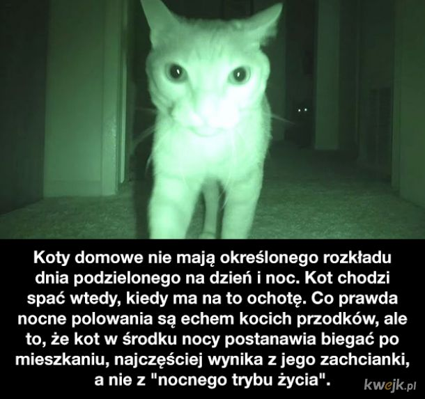Ciekawostki o kotach, obrazek 3