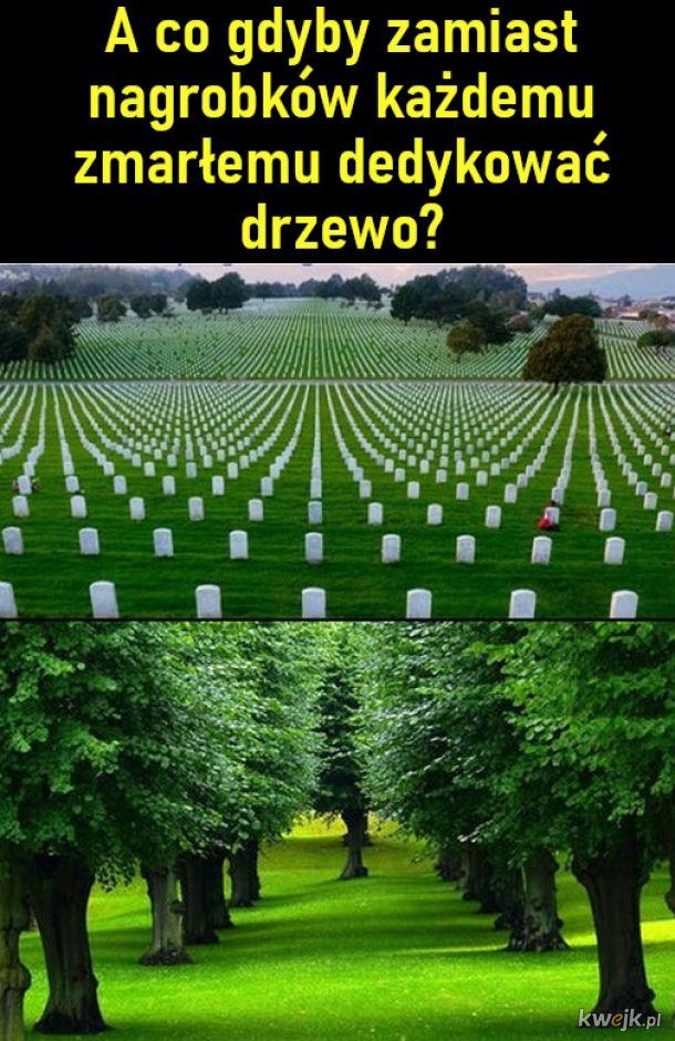 A gdyby zamiast nagrobków posadzić drzewa?
