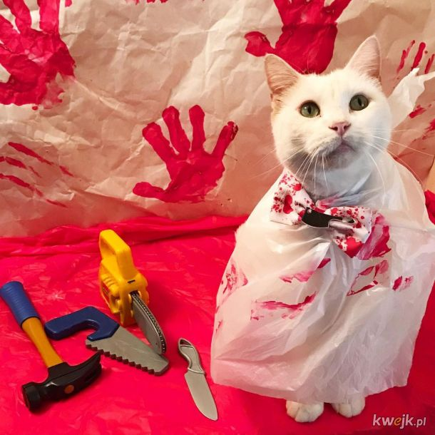 Słodkie kotki w Halloweenowych przebraniach