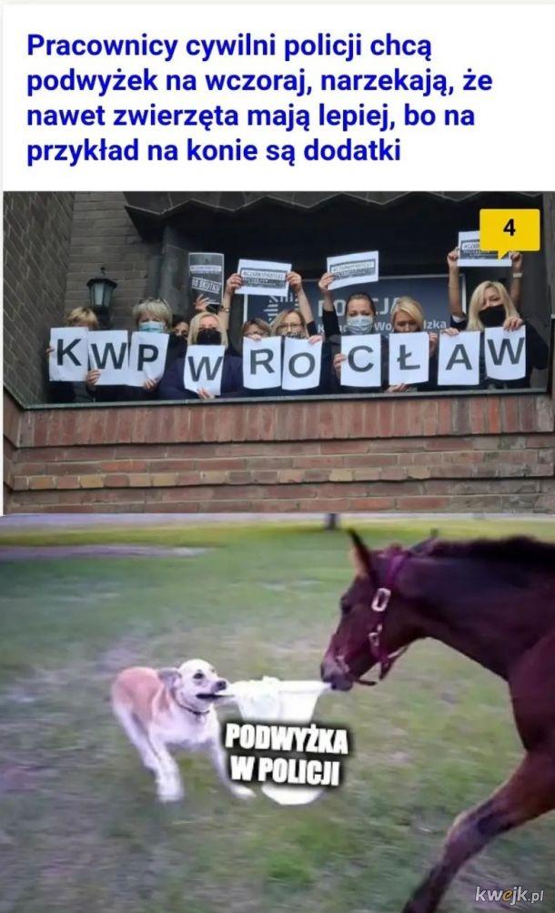 Konie mają lepiej od psów