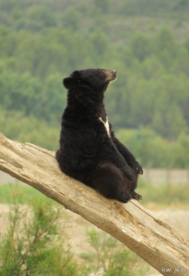Filozoficzne niedźwiedzie rozmyślające nad życiem, wszechświatem i całą resztą