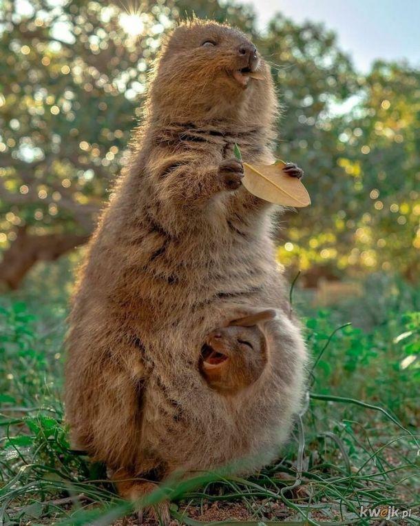Porcja słodkich zdjęć zwierzątek