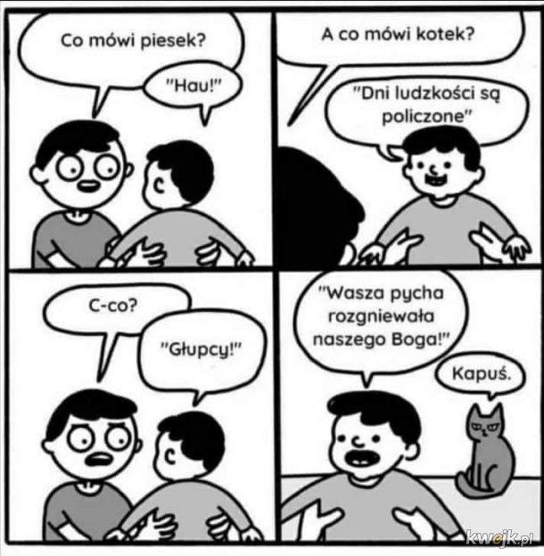 Co mówi kotek