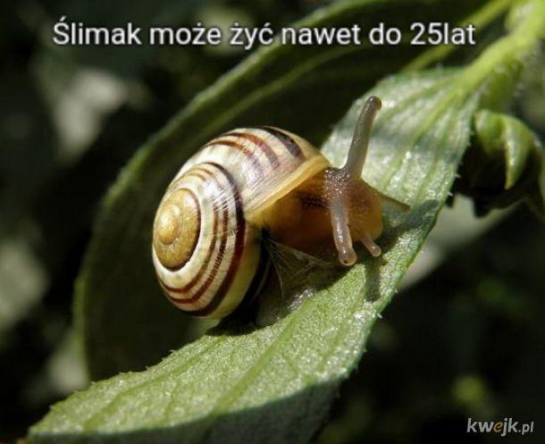 Kamil ślimak