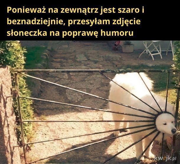Psie słoneczko