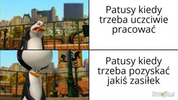 Patusy