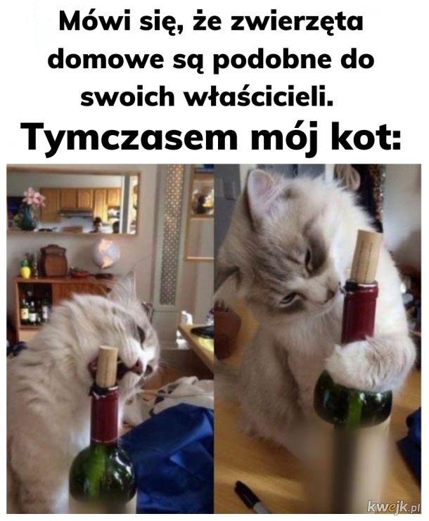 Wsypa