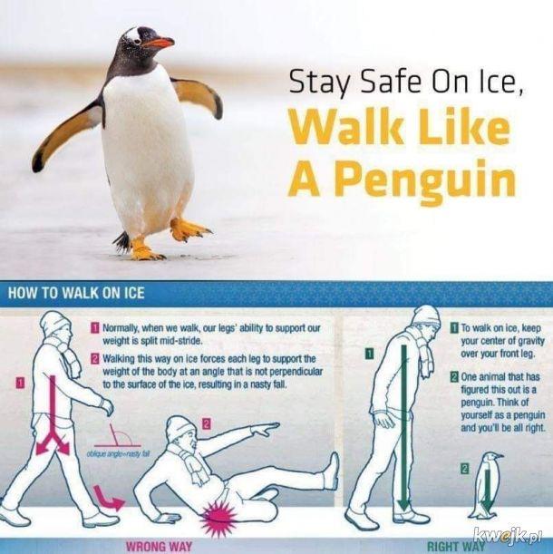 Jak pingwin.