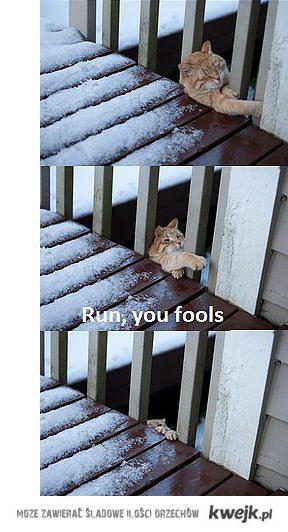 Run, you fools